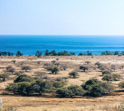 Image result for puru kambera