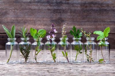 herba Tanaman Hias Indoor Dalam Air