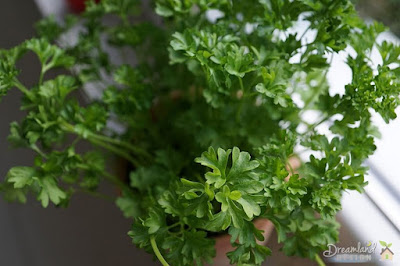 What to Expect of Growing Parsley at Home