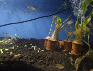 Cara Menguras Air Akuarium dengan Mudah