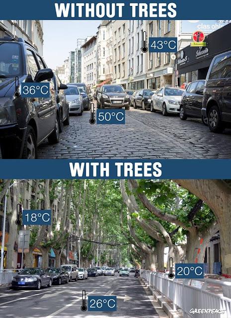 Temperatura de uma rua com árvores e de uma rua sem árvores