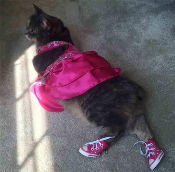 Nam sinh này dắt mèo cưng đi Prom