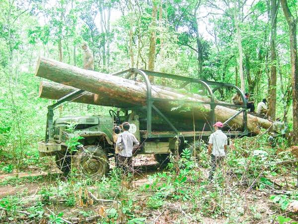 One of the trucks transporting timber from the Prey Lang forest, which is supposed to be a protected area. Supplied