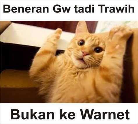 Download 95+  Gambar Kucing Lucu Dan Kata2 Paling Baru Gratis