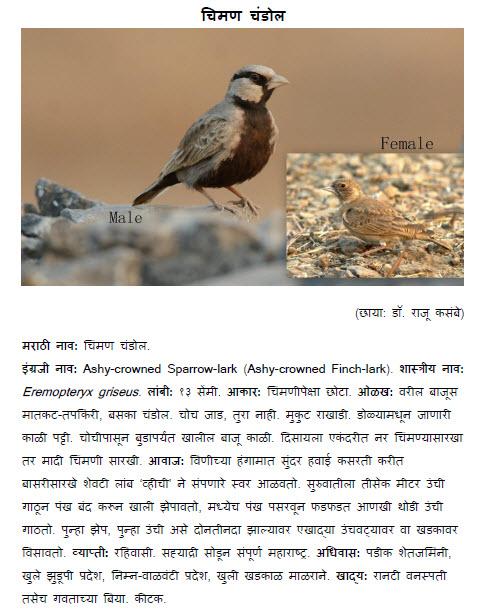 World Tourist Destinations Bird Information In Marathi