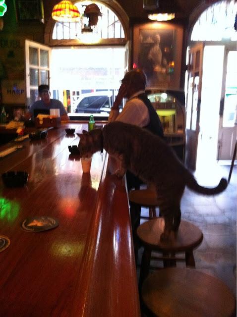 Este gato entra a un bar y pide un... ¡NO LO CREERÁS!