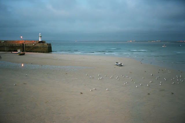Herring Gull school St Ives harbour Cornwall