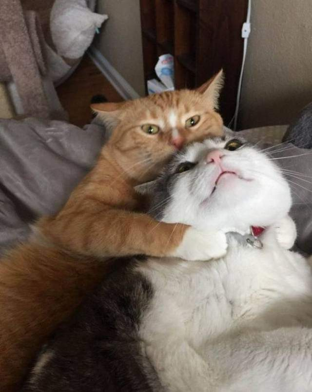 Funny cats - part 297, funny cat picture, cute cats