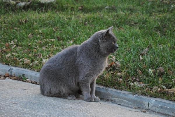 кошки осенью