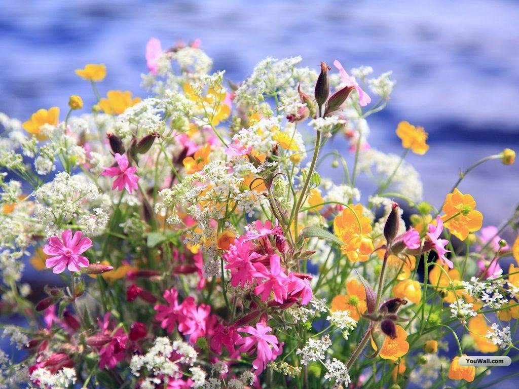 Maprox HD: 20 Beautiful Flowers Wallpapers ...
