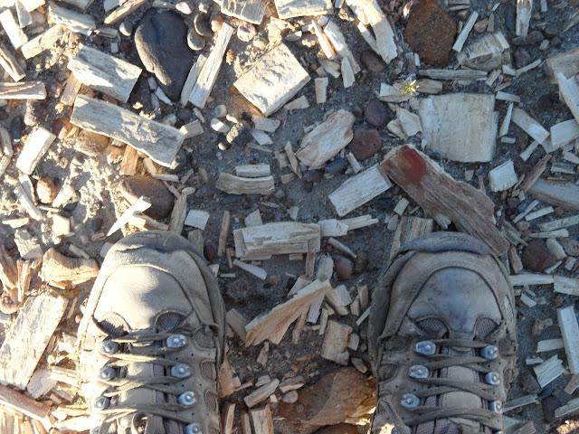 Em busca do BOSQUE PETRIFICADO DE SARMIENTO | Argentina