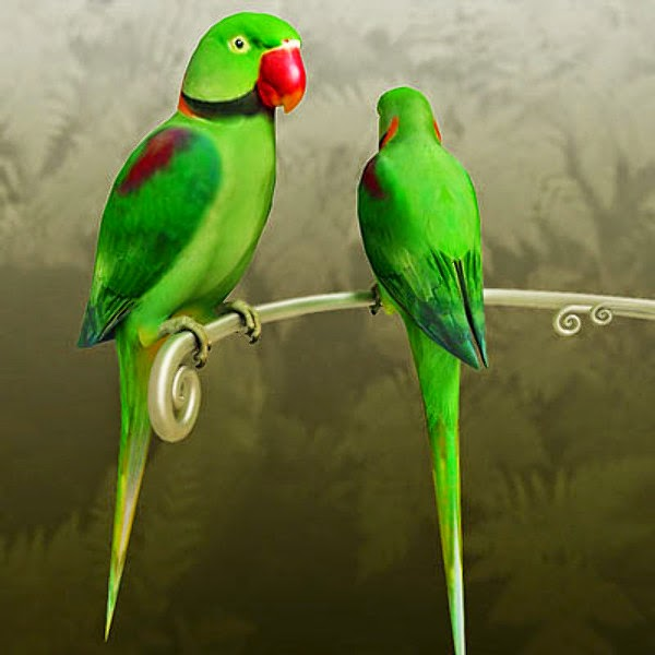 Kerala Pets Market: Illegal Parrots In India