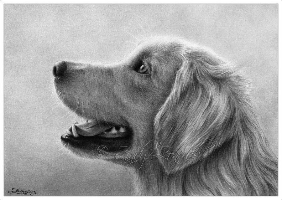 09-Golden-Retriever-Zindy-Nielsen-Fantasy-Animals-Meet-Realistic-Ones-www-designstack-co
