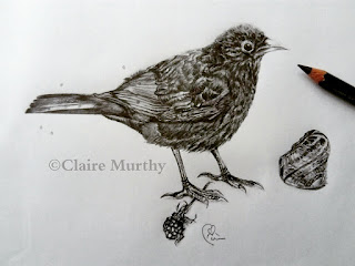 British bird illustration in pencil