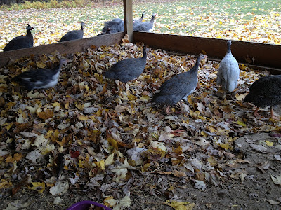 leaves, chicken coop