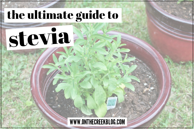 The ultimate guide to stevia! Tons of resources on how to grow & preserve the stevia plant! | On The Creek Blog
