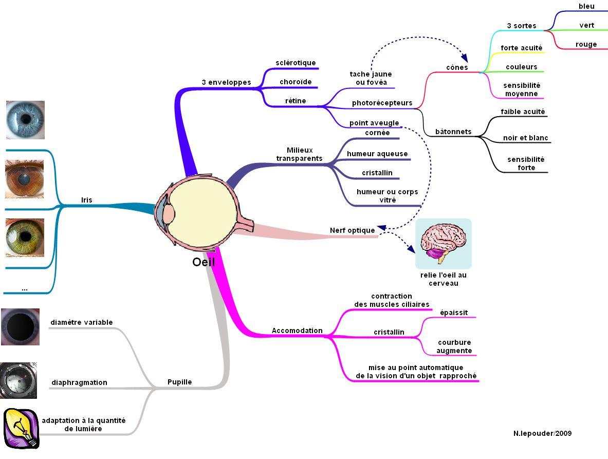 Kardi Le Blog Le Mindmapping Qu Est Ce Que C Est