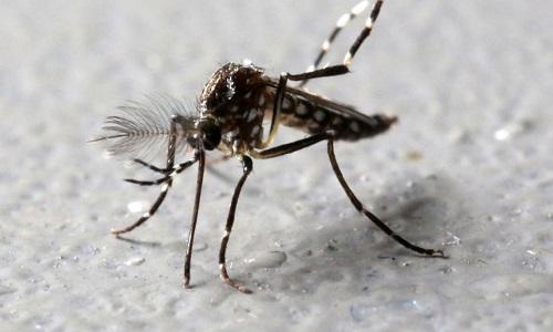 Sivrisinekler Hakkında İlginç Bilgiler