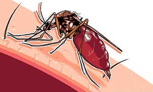 Bahaya Demam Berdarah Nyamuk Aedes Aegypti