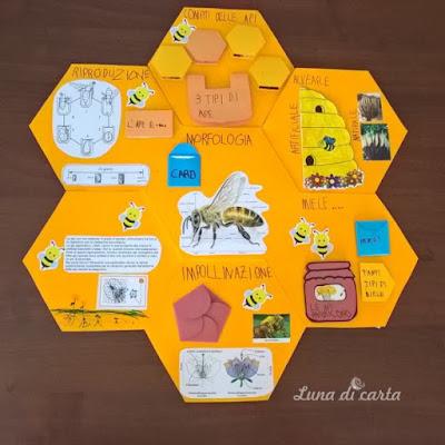 studiare api
