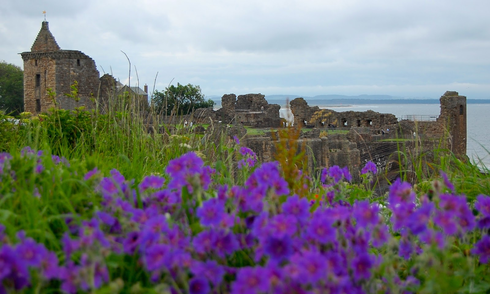 Wildflowers outside St. Andrews Castle, Scotland