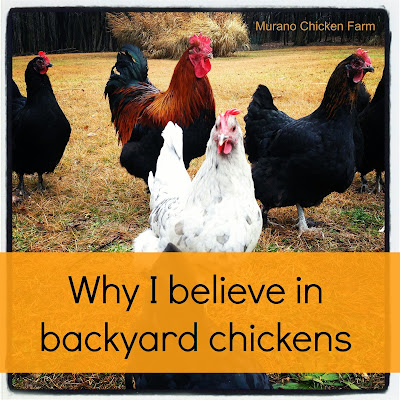 why everyone should raise chickens for eggs