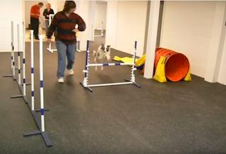 Greatmats Rubber Flooring Dog Training Flooring