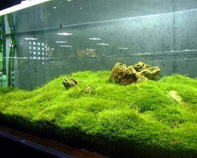 https://www.rifatview.com/2018/12/inilah-beberapa-jenis-tanaman-aquascape.html