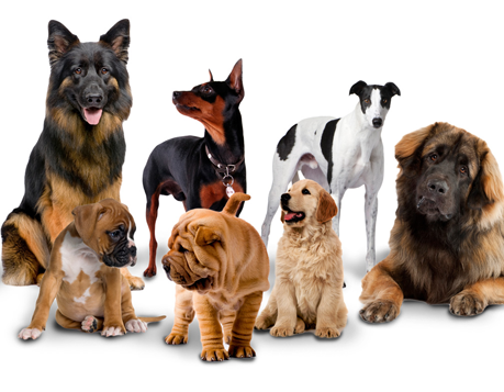 Dog Breeds Blog