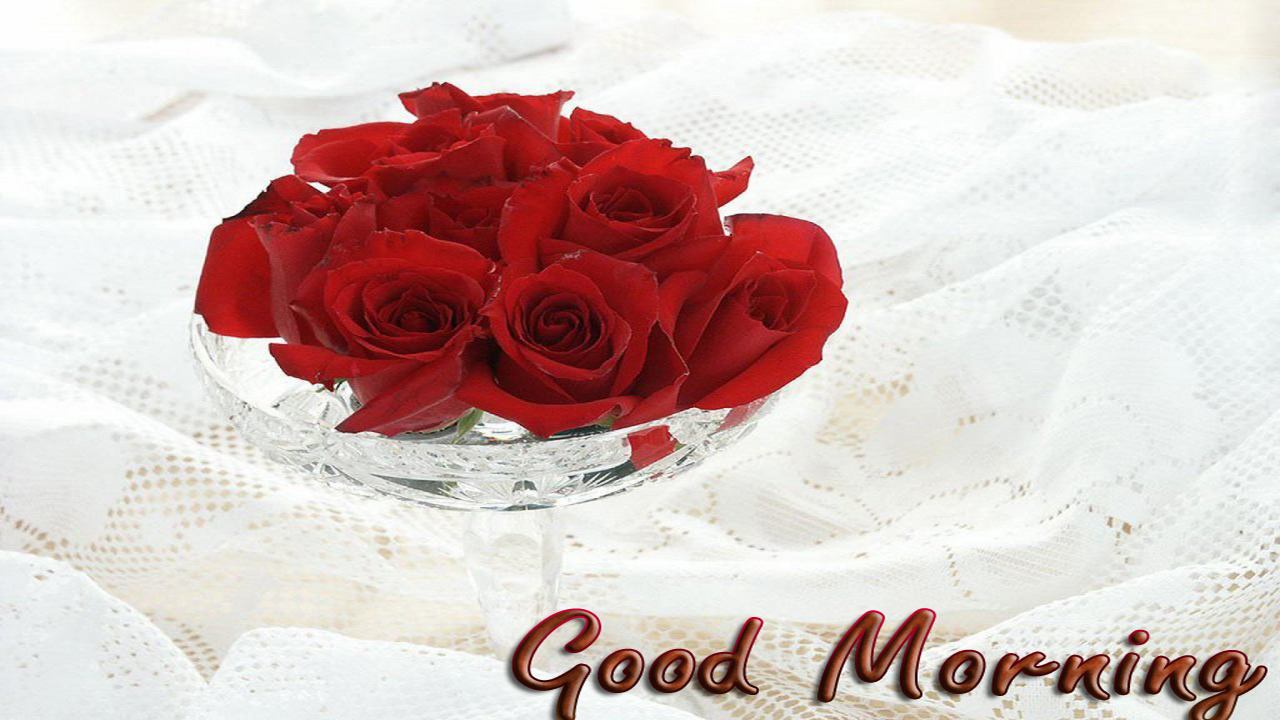 Global pictures gallery good morning roses images hd - Good morning rose image ...