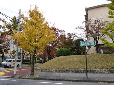 香里団地の並木(いちょう通りの紅葉)