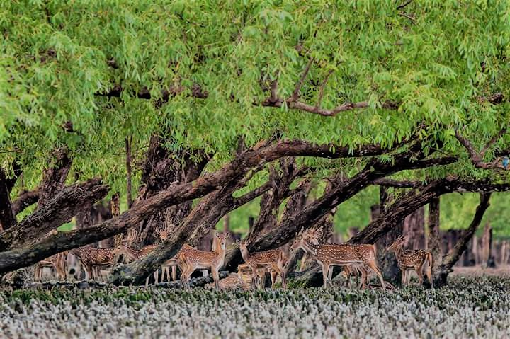 Hiron Point Sundarban