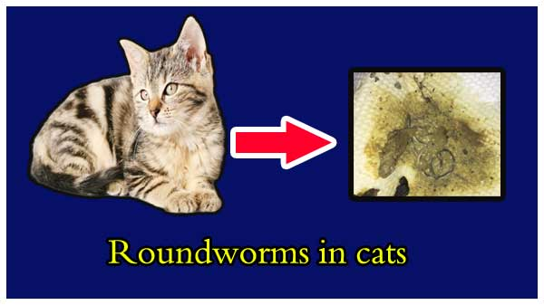 round worms in cats