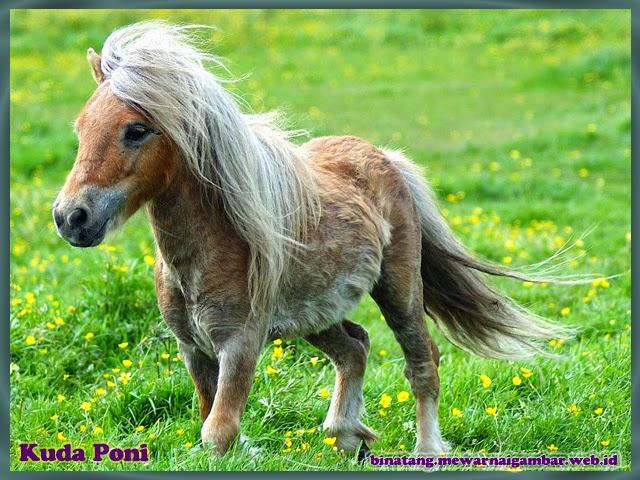gambar binatang kuda phoni