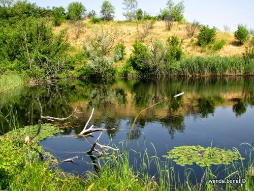 Il laghetto del giardino della Rosa Antica di Serramazzoni