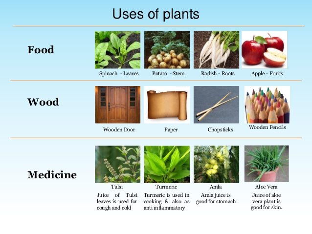 How Plants Are Useful To Us Life Mechanisms Of Plants Akshay
