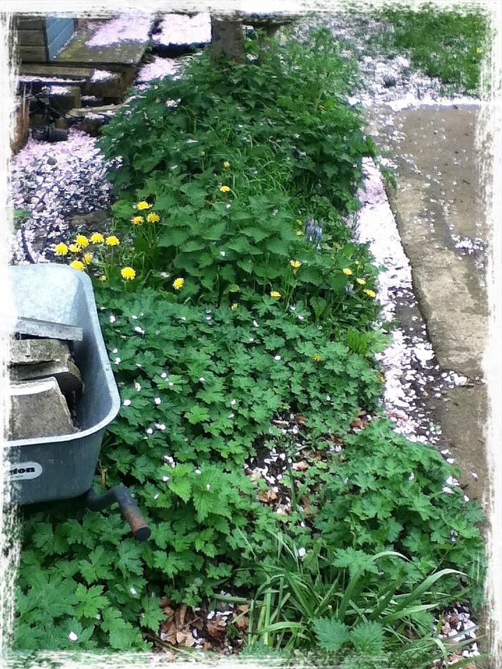Simple Natural Handmade: A Small Herb Garden
