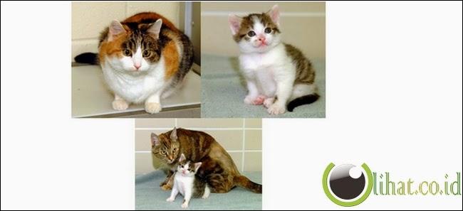 CC Alias Carbon Copy, Kucing Kloning d! Amerika Serikat