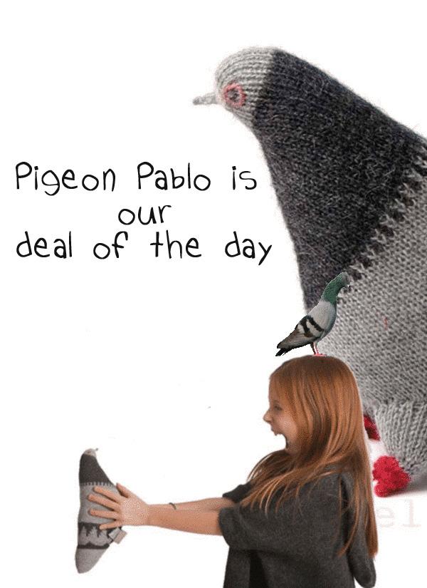knuffelduif Pablo