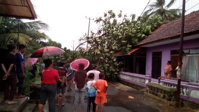 Pohon Tumbang Timpa Rumah Warga  Desa Sindangsari