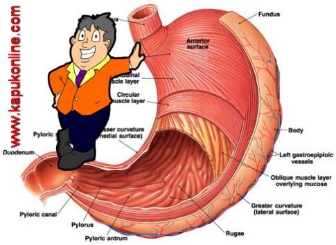 Penyebab Dehidrasi dan Cara Mengatasinya
