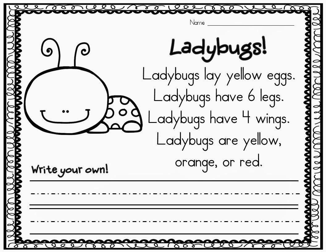 Insect Fun In Kindergarten