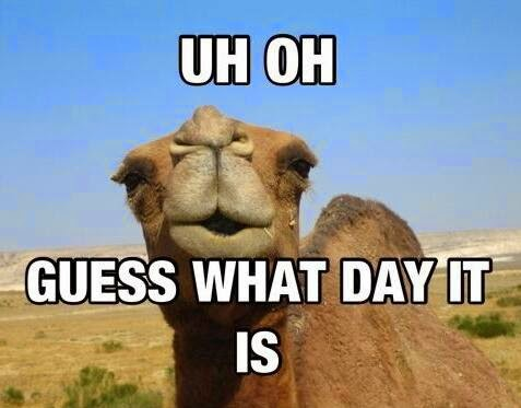 Hump Day Commercial Ringtone