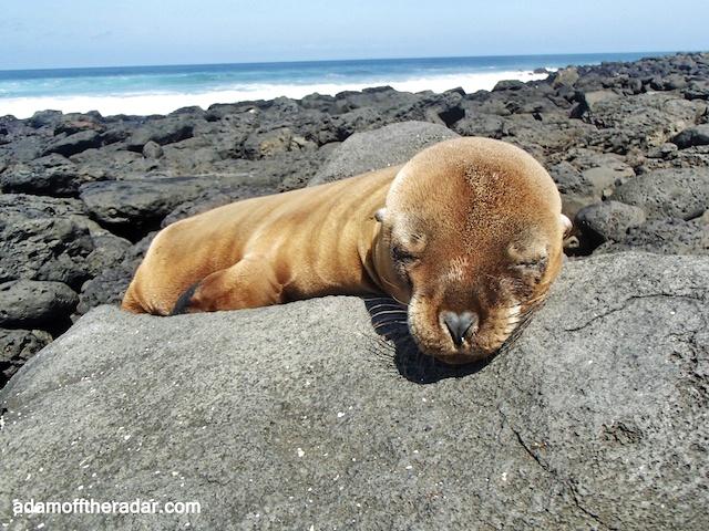 La Lobería,Galapagos Islands