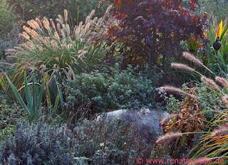 Wasser im Garten, Gräser, Blumenbeet, Staudenbeet, mit Gräsern