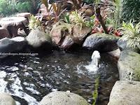 Kolam Ikan Minimalis nan Indah Alami