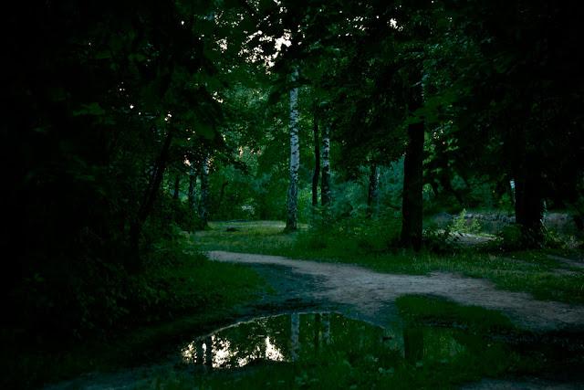 Вечер. Лес. Озеро.