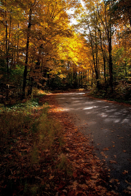A curving road in the country with bright yellow fall trees.