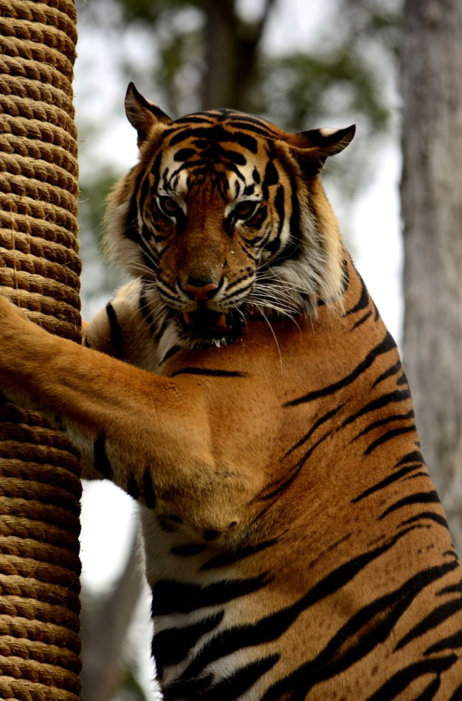 Tiger Pictures Download Free Images & Stock Photos on Unsplash