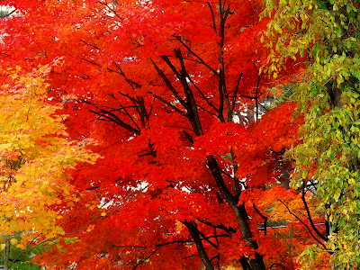 fall, leaves, russet, red, gold, autumn